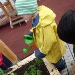 Appetit auf Nachhaltigkeit - Hochbeete auf dem Millerntorstadion
