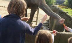 FridayForGood Twitter Kita Kinderburg in Hagenbeks Tierpark